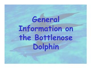 General Information on the Bottlenose Dolphin