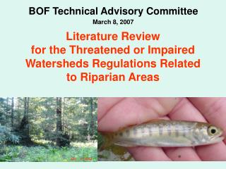 Literature Review  for the Threatened or Impaired Watersheds Regulations Related to Riparian Areas