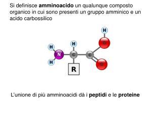 L'unione di più amminoacidi dà i  peptidi  e le  proteine