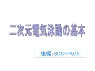 後編: SDS-PAGE