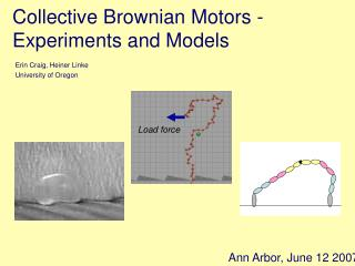 Collective Brownian Motors -   Experiments and Models