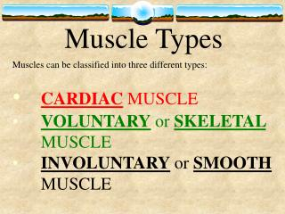Muscle Types