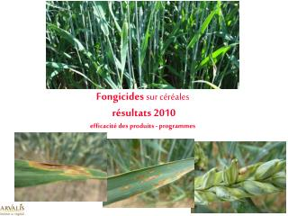 Fongicides sur c r ales  r sultats 2010 efficacit  des produits - programmes
