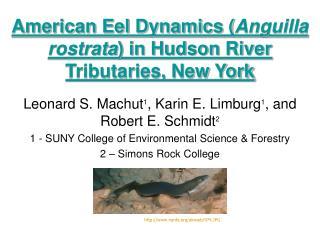 American Eel Dynamics ( Anguilla rostrata ) in Hudson River Tributaries, New York