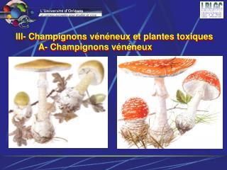 III- Champignons vénéneux et plantes toxiquesA- Champignons vénéneux