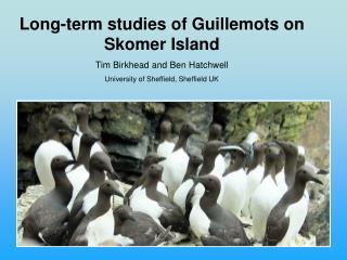 Long-term studies of Guillemots on Skomer Island Tim Birkhead and Ben Hatchwell