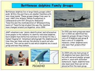 Bottlenose dolphins Family Groups