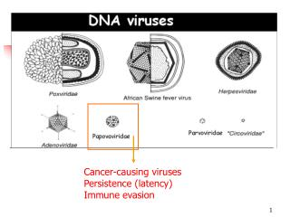 Cancer-causing viruses Persistence (latency) Immune evasion