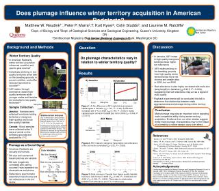 Does plumage influence winter territory acquisition in American Redstarts?