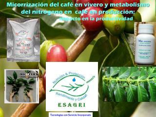 Micorrización  del café en vivero y metabolismo del nitrógeno en  café en producción: