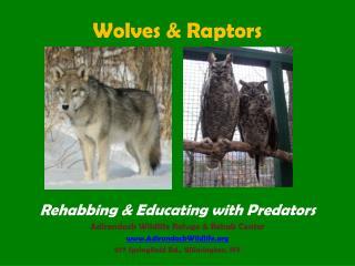 Wolves  Raptors