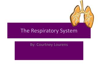 The R espiratory System
