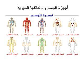 أجهزة الجسم و وظائفها الحيوية