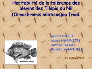 Heritabilit� de la tol�rance des alevins des Tilapia du Nil (Oreochromis niloticus)au froid.
