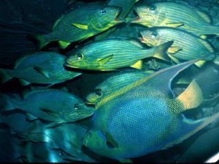 Sources of Fish Decline Habitat disruption