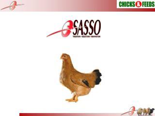 PERFORMANCE OF SASSO SA51 IN BANGLADESH