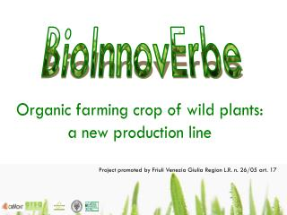 Organic farming crop of wild plants:  a new production line