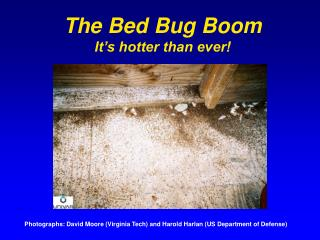 The Bed Bug Boom It's hotter than ever!