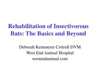 Rehabilitation of Insectivorous Bats: The Basics and Beyond