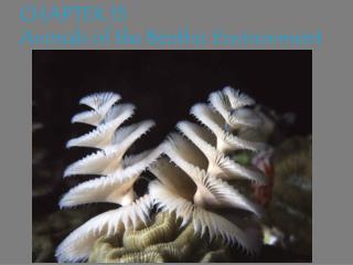 CHAPTER 15   Animals of the Benthic Environment