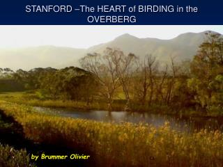 STANFORD –The HEART of BIRDING in the OVERBERG