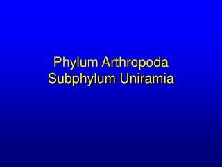 Phylum Arthropoda Subphylum Uniramia