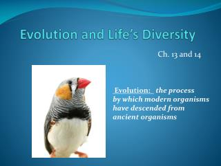 Evolution and Life's Diversity
