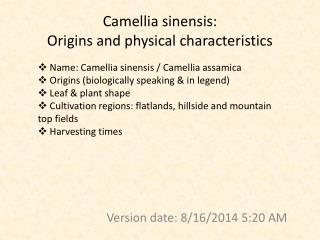 Camellia sinensis:  Origins and physical characteristics