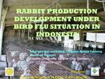 RABBIT PRODUCTION DEVELOPMENT UNDER BIRD FLU SITUATION IN INDONESIA