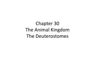 Chapter 30 The Animal Kingdom The Deuterostomes