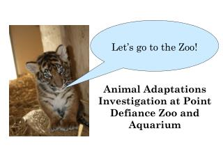 Animal Adaptations Investigation at Point Defiance Zoo and Aquarium