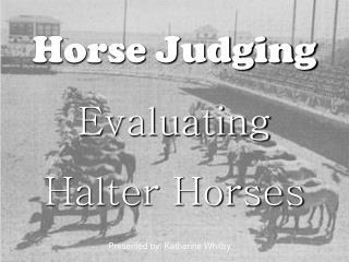 Horse Judging Evaluating  Halter Horses