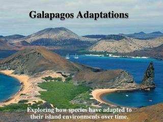 Galapagos Adaptations
