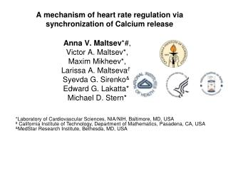 A mechanism of heart rate regulation via synchronization of Calcium release