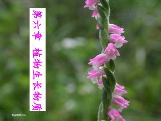 第六章  植物生长物质
