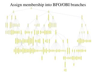 Assign membership into BFO/OBI branches