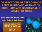 OBSERVATIONS OF TREE DAMAGE AFTER HURRICANE WILMA FROM BOTH HAND AND MECHANICALLY HARVESTED TREES