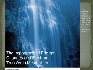 The Importance of Energy Changes and Electron Transfer in Metabolism
