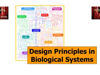 Principia Biologica