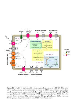 Ribulose-5-phosphate
