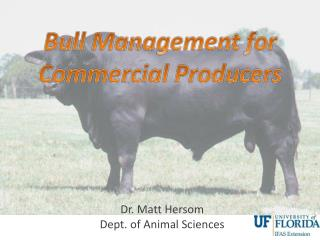Bull Management for Commercial Producers