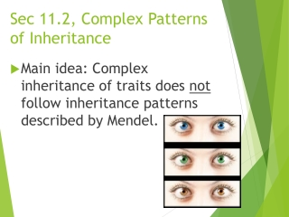 Chromosomal Patterns of Inheritance