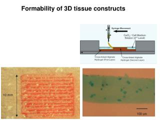 Formability of 3D tissue constructs