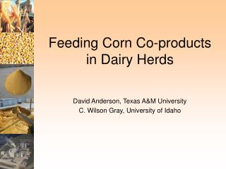Feeding Corn Co-products in Dairy Herds