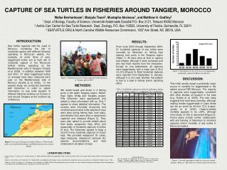 CAPTURE OF SEA TURTLES IN FISHERIES AROUND TANGIER, MOROCCO