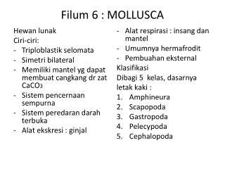 Filum  6 : MOLLUSCA
