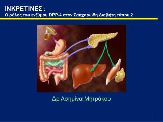 ΙΝΚΡΕΤΙΝΕΣ :  Ο ρόλος του ενζύμου  DPP-4  στον Σακχαρώδη Διαβήτη τύπου 2