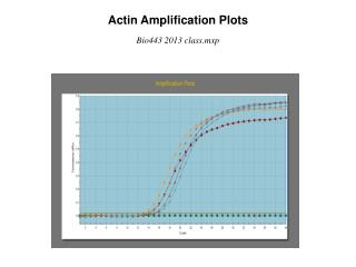 Actin Amplification Plots
