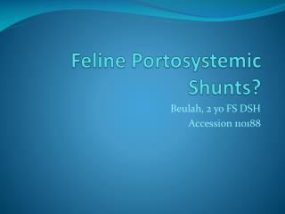 Feline Portosystemic Shunts?