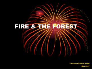 FIRE & THE FOREST